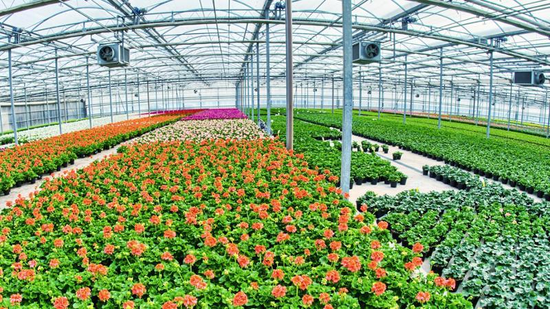 Mf0520 1 operaciones b sicas en viveros y centros de for Viveros plantas en temuco